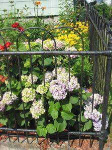Plantes pour petits jardins, les arbustes et les buissons colorés