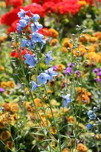 Comment faire pousser des fleurs, des graines à l'intérieur