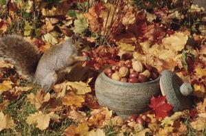 Mangeoires Écureuil fait maison pour les enfants