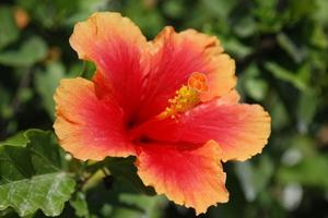 Arbustes à croissance rapide pour la chaleur du soleil