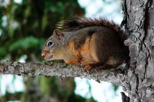 Filature mangeoires écureuil-gratuit