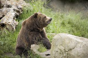 Comment faire pour soulager la douleur des ours mace