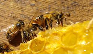 Comment rouler & décorer des bougies de cire d'abeille