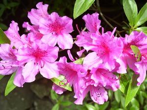 Les meilleurs arbustes de croître à côté de la Fondation de votre maison en zone 7 a