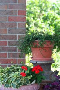 Idées de Design de jardin fleuri