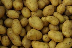 Quels sont les bienfaits des pommes de terre Russet ?