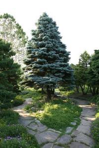 Arbustes à feuillage persistant qui tolère les sols argileux