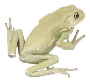 Comment faire des pieds de la grenouille