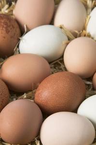 Comment faire une salade aux œufs pas d'odeur