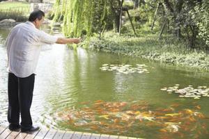 Quels sont certains poissons d'un étang à poissons en plein air ?