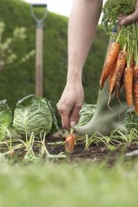 Les meilleurs gants de jardinage vert