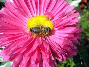 Dans quelle partie d'une fleur des Grains de Pollen sont faites ?