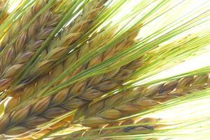 Aliments avec les comtes de fibres plus élevés
