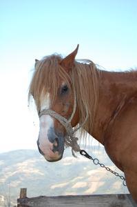 Comment corriger les problèmes de comportement chez le cheval