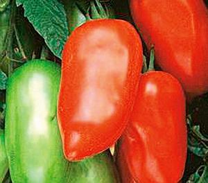 Sur les tomates Roma
