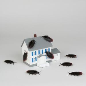 Quelles odeurs repoussent les cafards ?