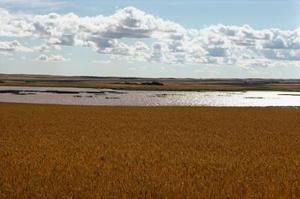 Quels sont les facteurs abiotiques du Biome Prairie ?