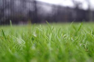 Comment Sprig Bermuda Grass