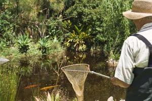 Comment faire pour tuer les mauvaises herbes aquatiques