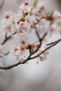 Cadeaux pour bébé fleur de cerisier
