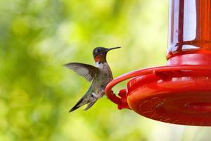 Identification des oiseaux de jardin