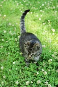 Comment se débarrasser des puces de chats avec un remède naturel maison