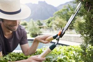 Comment tailler les arbustes de cèdre