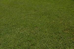 Temperature de germination du ray grass for Temps de germination gazon