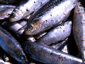Comment faire pour les filets de Sardines fraîches