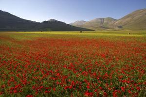 Fleurs italiennes traditionnelles