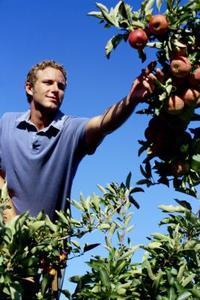 Quel genre d'engrais est bon pour les arbres fruitiers ?