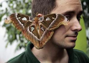 Que faire si un insecte pénètre dans l'oreille