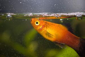 Comment vivent les roulement poisson race ?