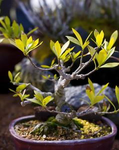 Comment faire un jardin Miniature sans plantes vivantes