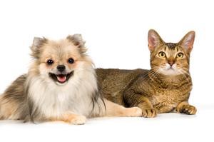 Heartworms chez les chiens & chats