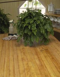 Les meilleurs Houseplants intérieures de faible luminosité