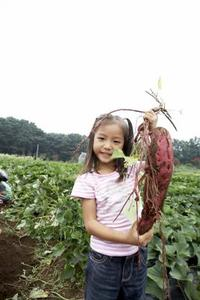 Comment faire pousser des patates douces par temps chaud - Comment planter des patates douces ...
