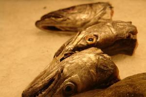 Comment faire des engrais au poisson de restes de poisson