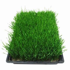 Je suis planter des semences à gazon à l'aide de compost de champignon : ai-je besoin d'ajouter du sol ?