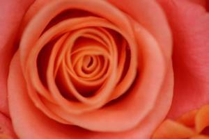 Comment ajouter la glycérine à l'eau de Rose pour les peaux grasses