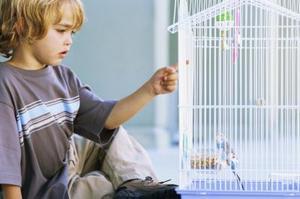 Comment utiliser les journaux pour tapisser une Cage d'oiseau