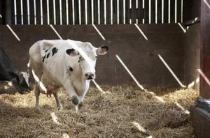 Spécifications de l'aiguillon à bétail