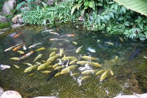 Quelle quantité de sel est nécessaire pour un étang de poissons ?