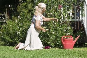 Les facteurs qui influencent la perte d'eau chez les plantes