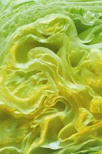 Comment faire pour conserver la laitue iceberg fra ches plus longtemps - Comment conserver la salade ...