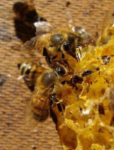 faire un generateur a la cire d abeille. Black Bedroom Furniture Sets. Home Design Ideas
