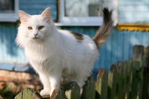 Que puis-je mettre sur ma clôture pour empêcher les chats de marcher dessus ?