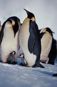 Comment piquer un bec sur un pingouin en peluche