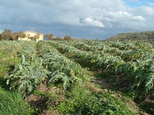 Guide de plantation des légumes en Californie du Nord