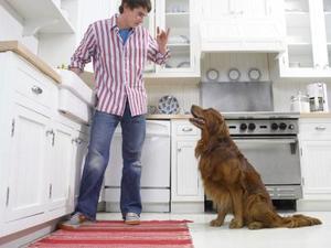 Shampooing chien antiprurigineux - Produit pour empecher les chiens d uriner ...